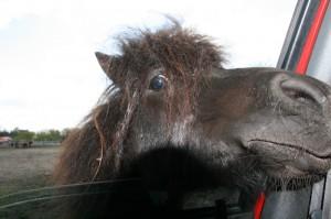 anderes Pferd