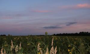 Sonnenblumen am Abend - Sommerende
