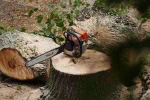 Am Ende bleibt ein Baumstumpf