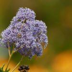 Hellblau-violett