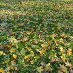 Herbstwiese