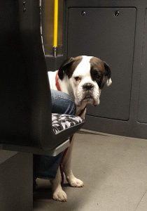 Hund - handylos